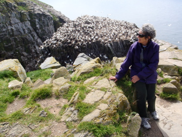 K, three feet from the edge of a cliff, supervising the gannets at Cape St Mary's.
