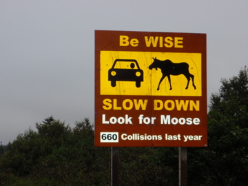 A final word of wisdom. We were hoping for close encounters with meese but only managed to see a single one, way off in the distance.